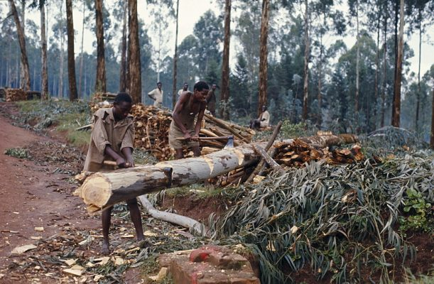 small scale deforestation image rural