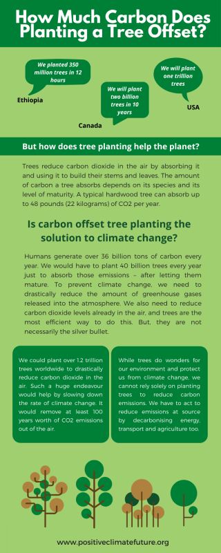 How Much Carbon Does Planting a Tree Offset?